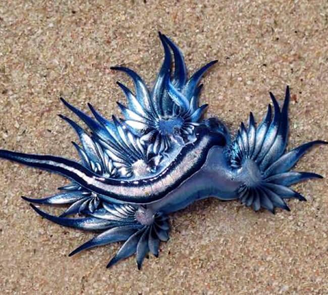 dragón marino playa