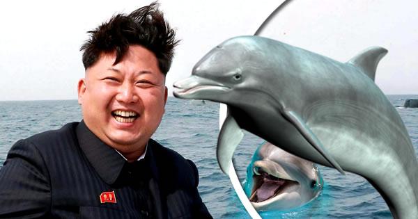 delfin ok