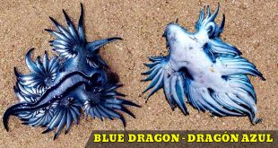 dragon azul playa blue dragon beach