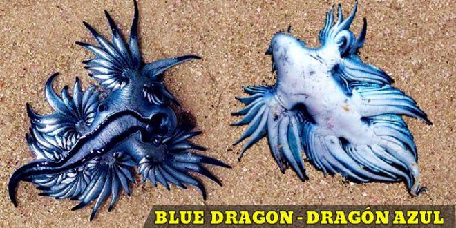 dragon azul playa blue dragon beach