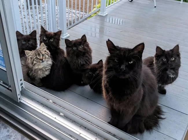 gata lleva bebés visitar amiga