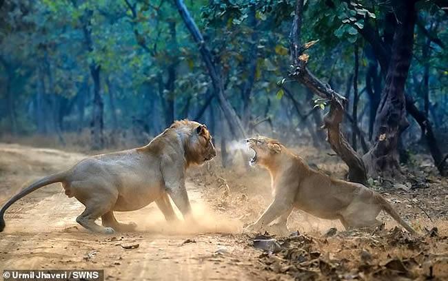 leona vs león
