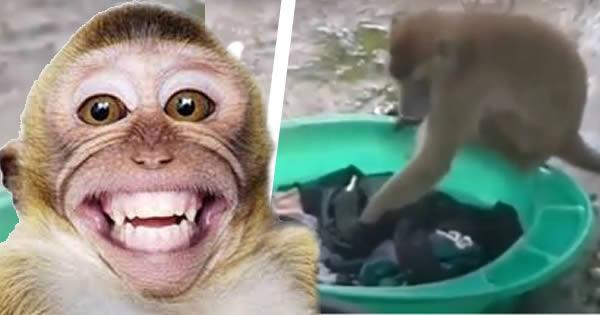 mono lavando la ropa
