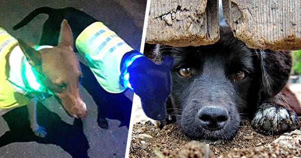 perros calle chalecos reflectivos