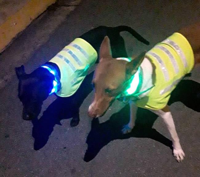 perros chalecos reflectivos calle