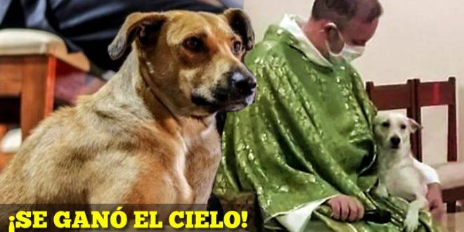 padre perros calle adopta