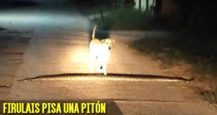 perro pisa piton serpiente