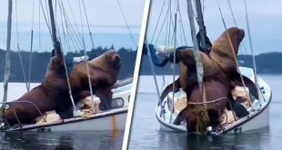 leones marinos barco
