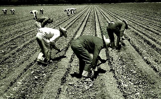firulais trabajadores mexicanos USA