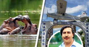 científicos hipopótamos pablo escobar hacienda napoles