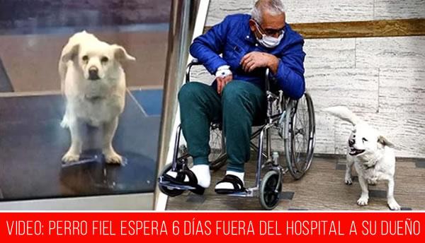 Perro fiel espera 6 días fuera del hospital a su dueño