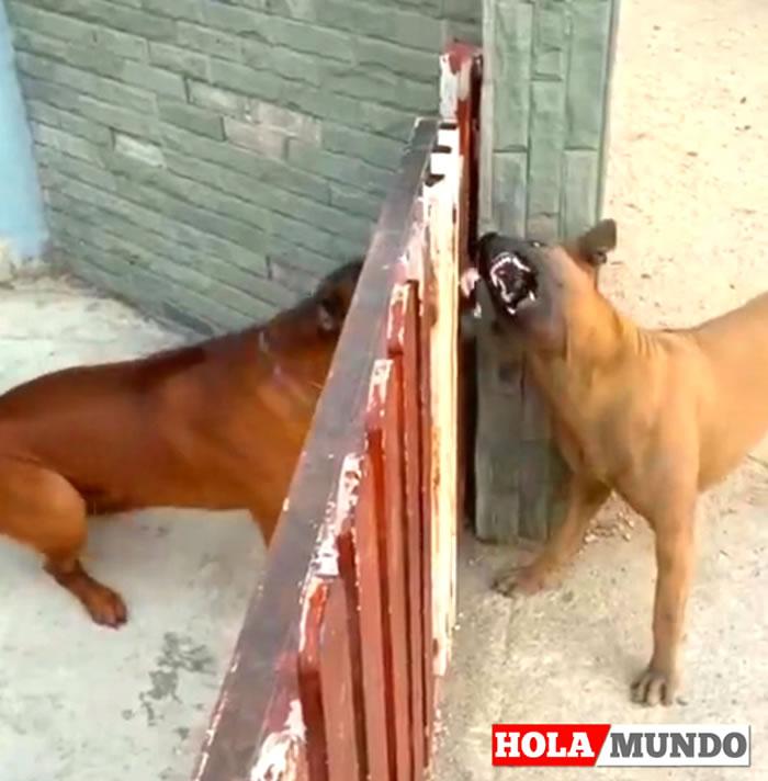 perros hola mundo