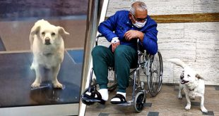 perro leal espera dueño fuera hospita
