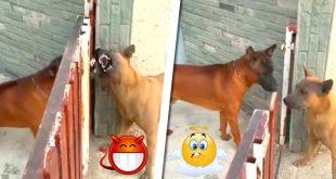 perros ladran puerta corrediza