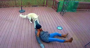 perro quiere salir pasear mujer ríe capucha